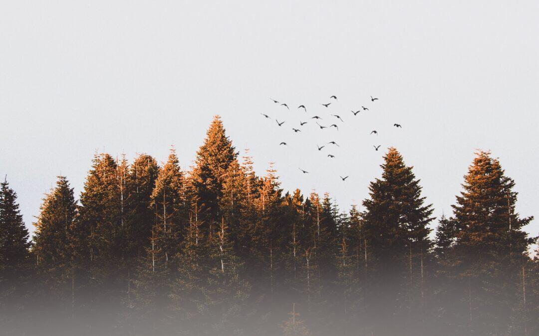 Mientras los árboles callan…